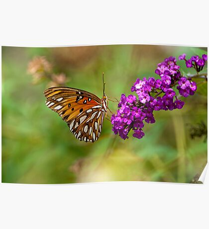 Gulf Fritillary for Jesika and Jim Poster