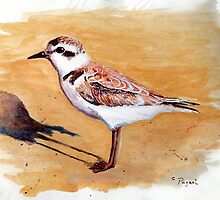 Snowy Plover Oregon Shorebird Acrylic Painting by Pagani