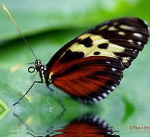 Butterfly Reflections by Pam Moore