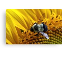 *BUMBLEBEE ON A SUNFLOWER* Canvas Print