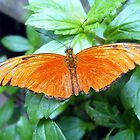 Brilliant Orange Butterfly by Tom Clancy
