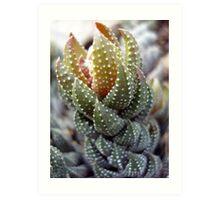 Wierd and Wonderful Plant Art Print