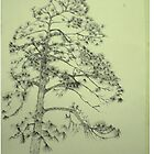 Gaint Silver Pine by Newhouser
