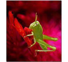 Infant Pest Photographic Print