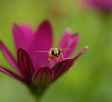 Pollen is Yum-Yum by vanStaffs