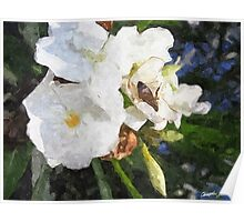 Single White Oleander with Bee 1 Painterly Poster