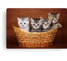 Four striped kitten in a basket Canvas Print