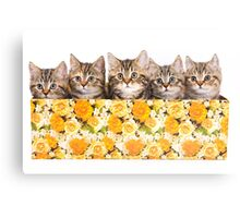 Five striped kitten in a box Canvas Print