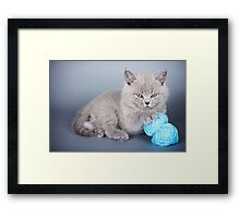 Fluffy gray kitten Framed Print