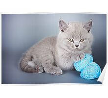 Fluffy gray kitten Poster