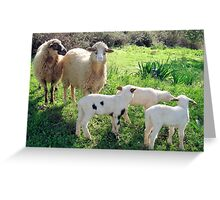 Two Ewes and Three Lambs Grazing Greeting Card