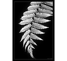 Fern Dance Photographic Print