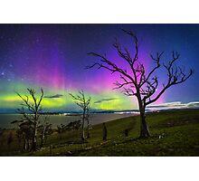 Aurora Treescape Photographic Print
