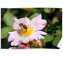 Eglantine and Bee Poster