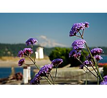 Beach Flowers Photographic Print
