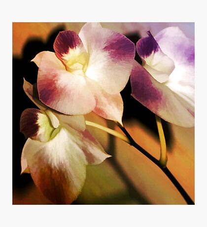 Hot Orchid Nights Photographic Print