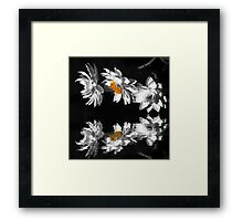 Paper Daisies Framed Print