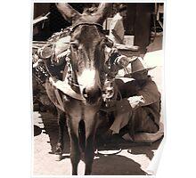 A Donkey day kinda life Poster