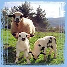 Ewe and Twin Spring Lambs  by taiche