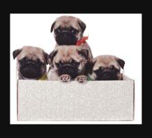 Three charming pug puppy in a box Kids Clothes