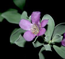 Texas Sage Flower by netta43