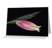 Dewdrop lily Greeting Card