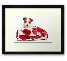 Jack Russell Terrier puppy and a red bag Framed Print