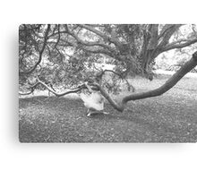 Startled BW Canvas Print