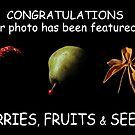 """Berries, Fruits & Seeds"" Feature Banner  by Barbara  Corvino"