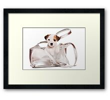 Jack Russell Terrier puppy and a bag Framed Print