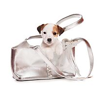 Jack Russell Terrier puppy and a bag Photographic Print