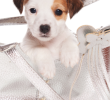Jack Russell Terrier puppy and a bag Sticker