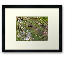 My House Is Flooded! Framed Print