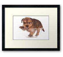 red terrier puppy Framed Print