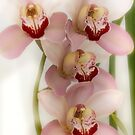 Beverly's Orchids by picketty