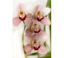 Beverly's Orchids Photographic Print