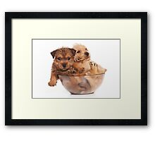 Two funny red terrier puppy in a cup Framed Print