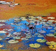Water lilies by Tamara Travers
