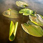 Lilly Pads with a bit of Water by Levi Edvalson