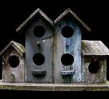 Sluggish Bird's Housing Market by patjila