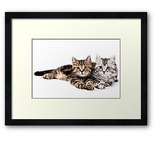 Two striped cat with big paws Framed Print
