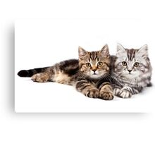Two striped cat with big paws Canvas Print