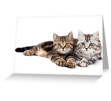 Two striped cat with big paws Greeting Card