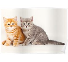 Two striped kitten Poster