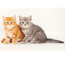 Two striped kitten Photographic Print