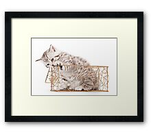 Funny striped kitten Framed Print