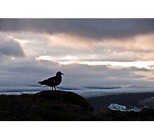 Bird at Glacier Lagoon Photographic Print