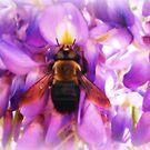 Bee About It by MistyHatten