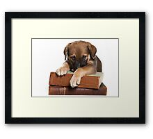 Funny brown puppy and book Framed Print