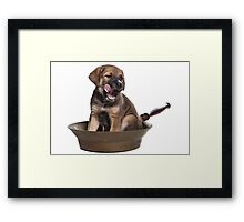 Funny Brown Puppy Framed Print